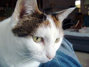 chemo-cat